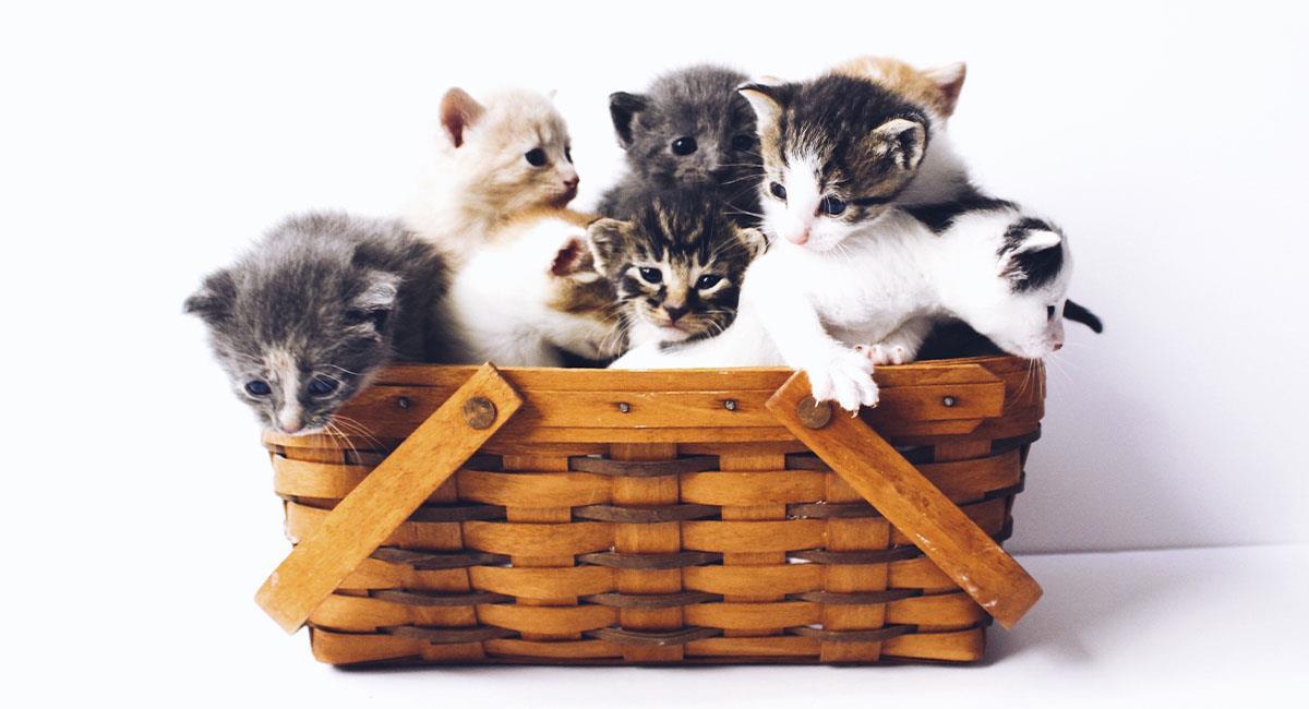 ¿Qué significa el color de tu gato?. Foto: Unsplash