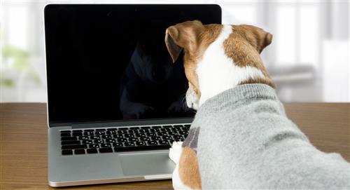 ¿Cómo registrar a tu mascota en el RUAC?